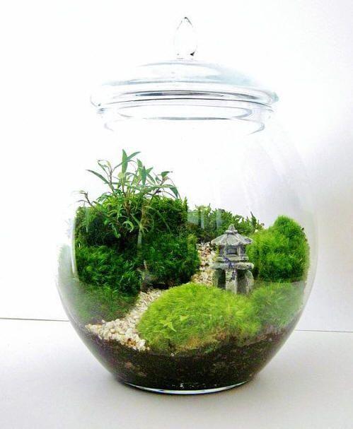 mini jardins em vidro : mini jardins em vidro:Terrarium Garden