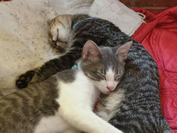 2 bellos durmientes
