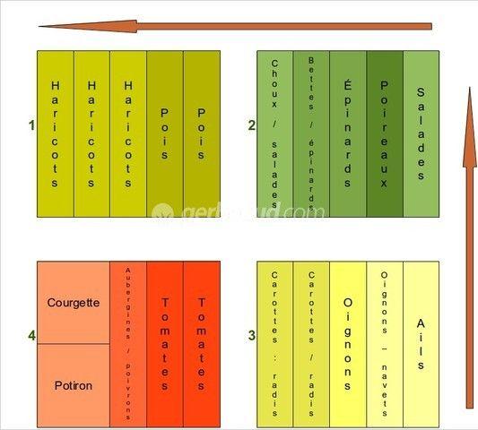 Modèles de rotation des cultures au potager