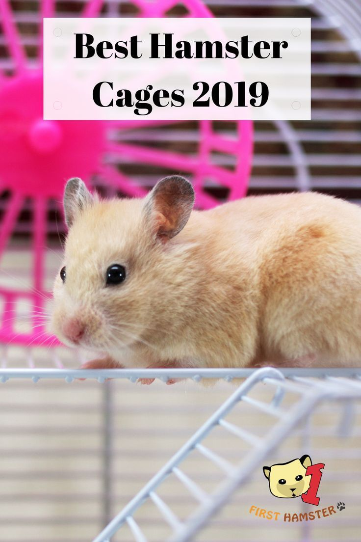 5 Best Hamster Cages For Syrian And Dwarf An Owner S Opinion