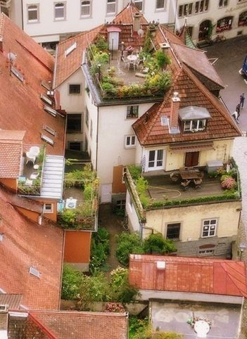 rooftop gardens...probably some place in europe...