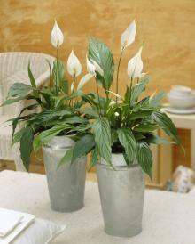 10 plantes d'intérieur dépolluantes - Femmes d'Aujourd'hui