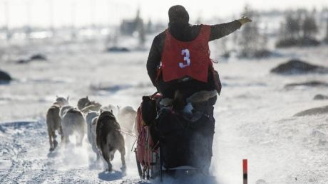 Hudson Bay Quest sled dog race cancelled for 2nd year in a row - http://www.newswinnipeg.net/hudson-bay-quest-sled-dog-race-cancelled-for-2nd-year-in-a-row/