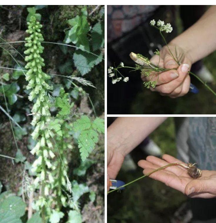 Les 13 Plantes Comestibles Facile A Reconnaitre En 2020 Plantes Comestibles Plante Potager Bio