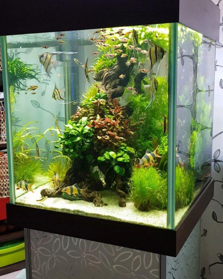 Aquarium Aquariumfreshwaterfishtanks Aquarium Fish Aquarium Fish Tank Aquascape Aquarium