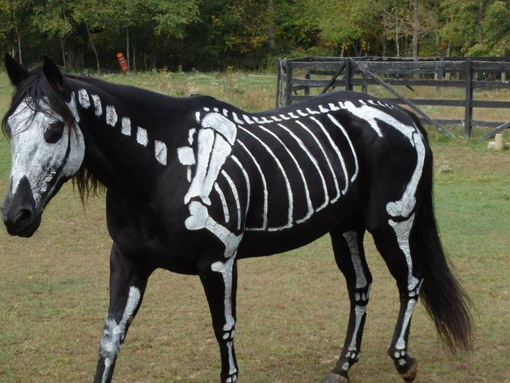 Awesome horse costume