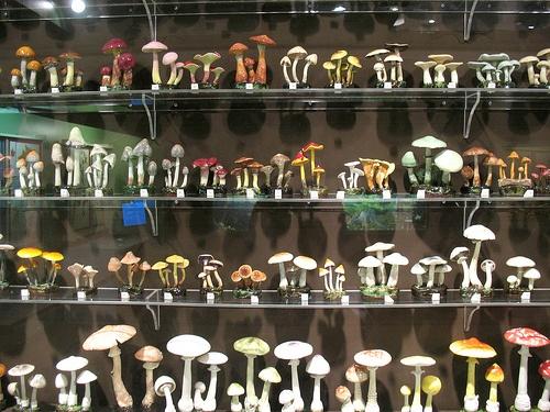 Lorenzen Mushrooms by kandisebrown, via Flickr