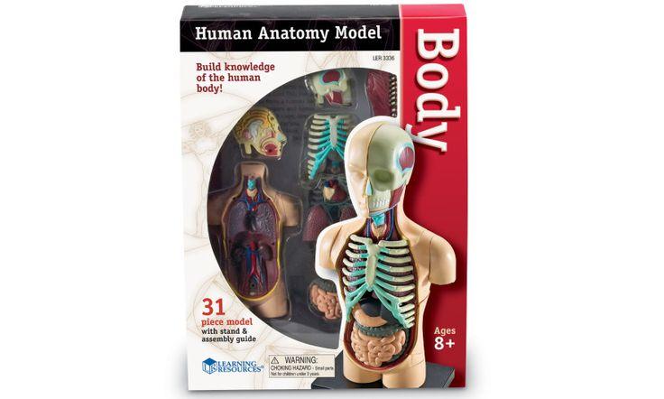 Human Anatomy Model Packaging