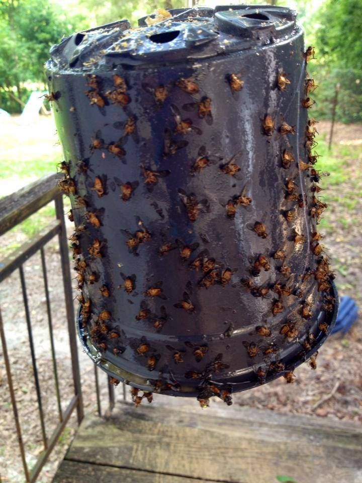 Flies Hanging Around Front Door Part - 45: Best 25+ Fly Remedies Ideas On Pinterest | Repel Flies, Fly Hack And Flying  Ants
