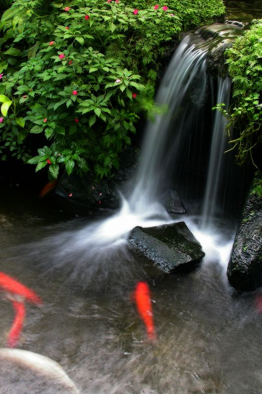 68 best images about landscape on pinterest best flower for Koi waterfall