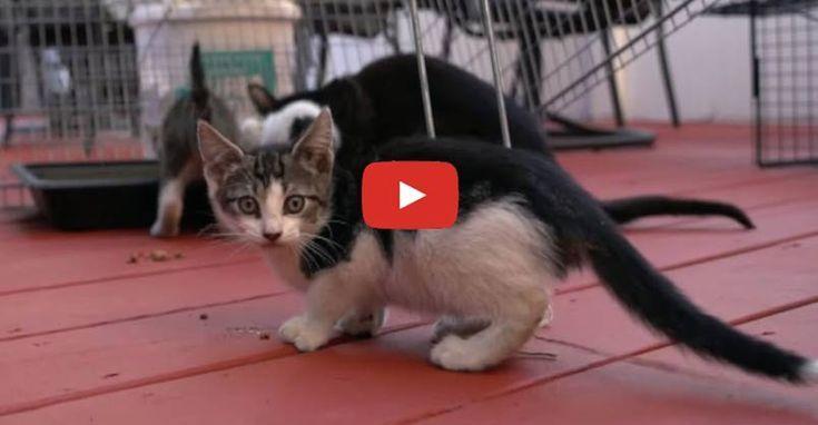 Socializing Feral Kittens Feral Kittens Cats And Kittens Kittens