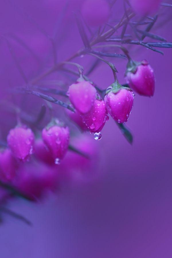 ~~ rain to know only・・・(mi wo siru ame…) by Chishou Nakada ~~