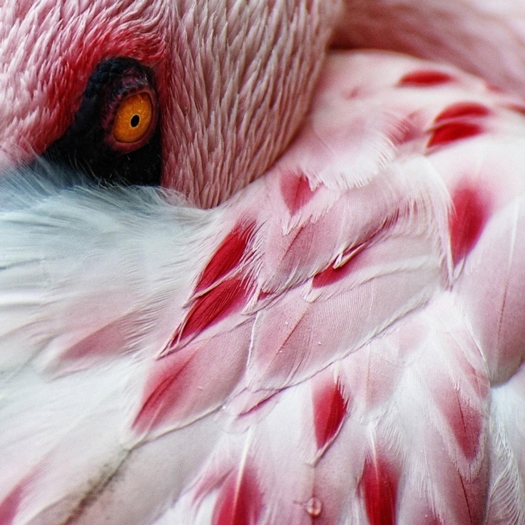 "Strange Facts about the Most Beautiful Bird on Earth ""Flamingo"""