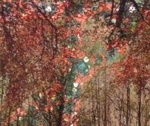 Transfert d'image avec huiles  à base végétale et techniques appliquées Au papier Japonais Initiez vous à cette méthode de transfert d'images des plus gratifiantes qui utilise des matériaux peu coûteux et à portée de main.