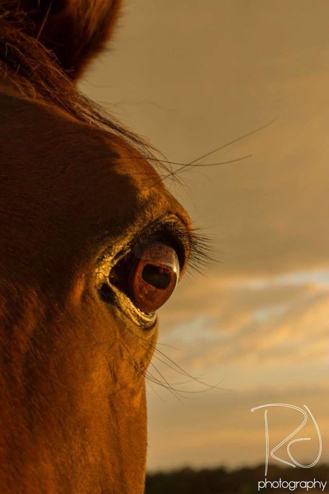 Horses Eye #racheljanetphotography