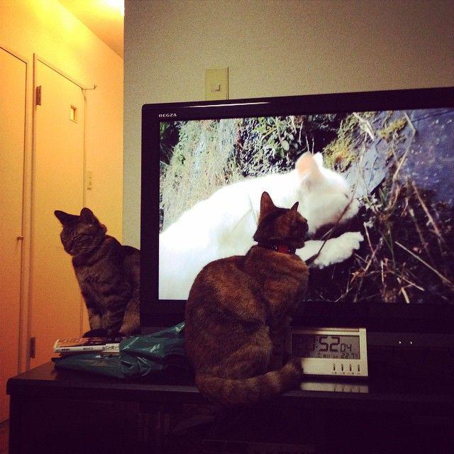 岩合さんの番組を見るクルミ