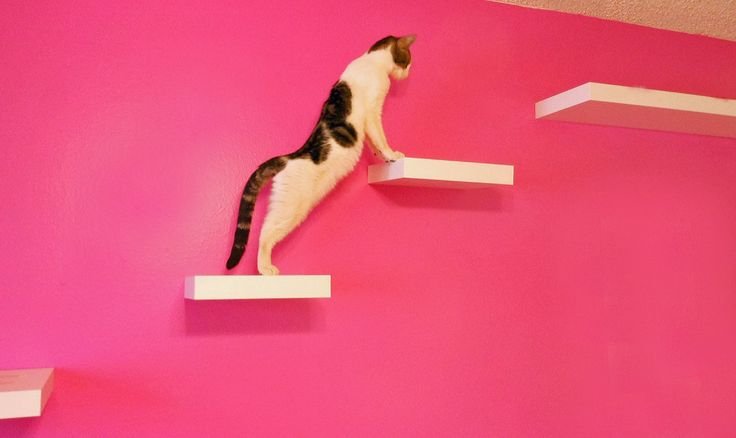 Best 25 ikea lack shelves ideas on pinterest ikea lack ikea shelf unit and ikea closet hack - Wall mounted cat climber ...