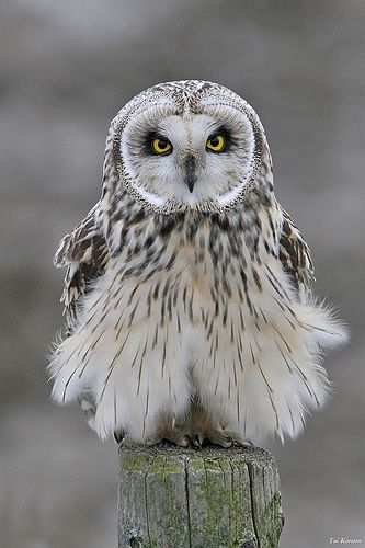Owl by rachidmiliani1: