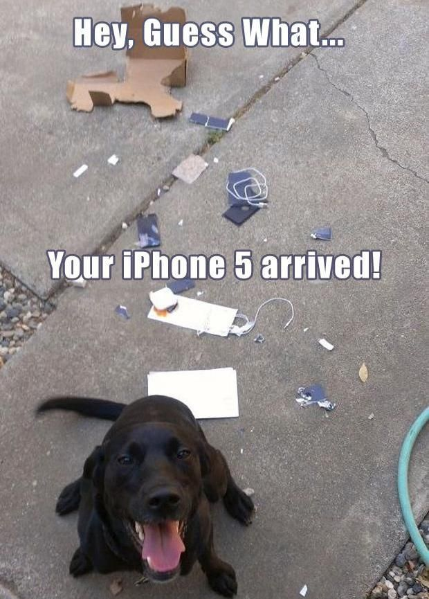 14 Animals Being *******s http://diva-diary.com/14-animals-being-s/