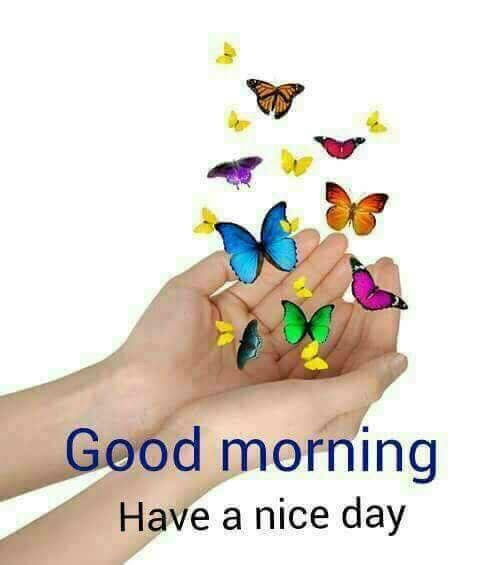 Good Morning greetings to All