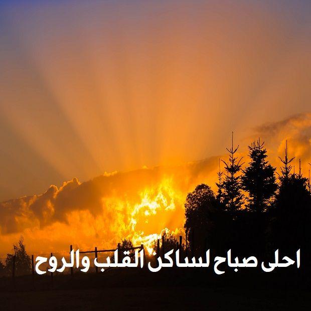 صور صباح الخير واجمل عبارات صباحية للأحبه والأصدقاء موقع مصري Good Morning Beautiful Morning Greeting Beautiful Rose Flowers