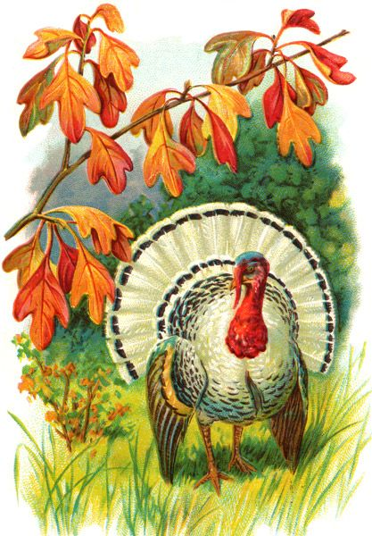 Thanksgiving Graphics - Image 2: