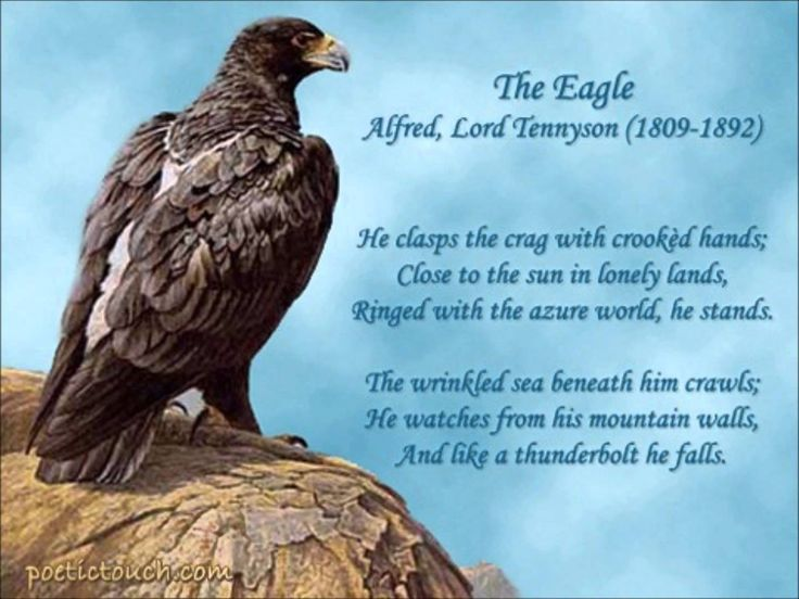 Anaylsis of Alfred Lord Tennyson's – The Eagle Essay Sample