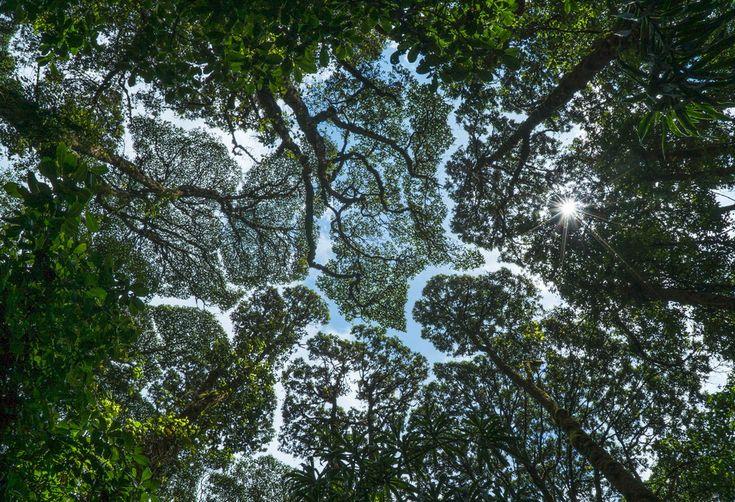 Необычные деревья | Записи в рубрике Необычные деревья | Дневник Три И ночка…