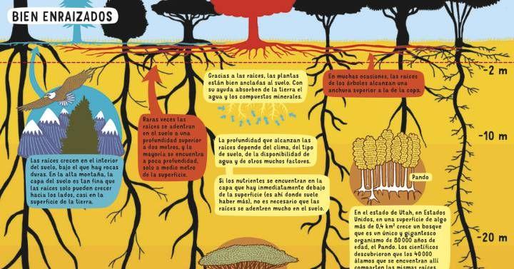 El llamado árbol de los pastores crece en las zonas secas del sur de África, como el Kalahari