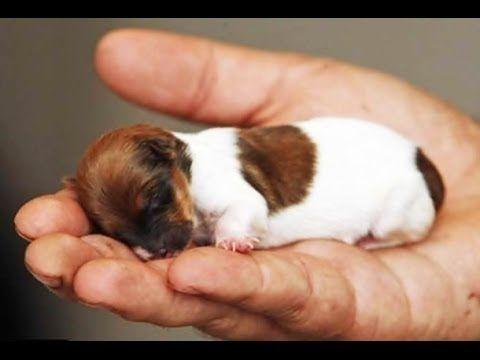 Die 5 kleinsten Hunde der Welt - YouTube