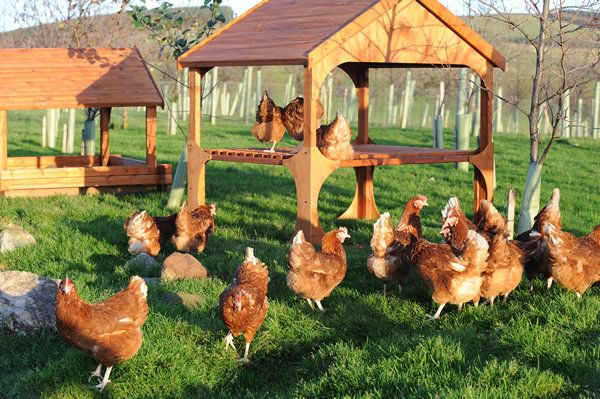 We're always looking for ways to keep our girls happy and recently commissioned research from University of Bristol to better understand chickens. This will inform ways we can continue to improve the playhouses and general welfare conditions we provide for our hens:   Have a read of some of the research highlights here http://thehappyegg.co.uk/happy-eggs-from-happy-and-intelligent-hens/