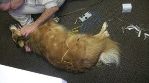 Veterinary Acupuncture Available with Dr. McManus!
