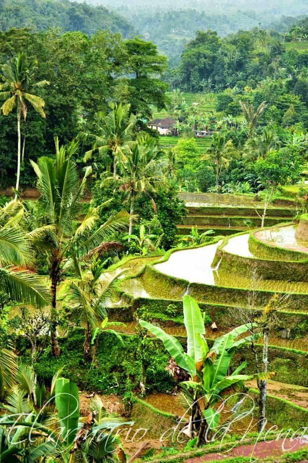 Mejores 496 imágenes de INDONESIA en Pinterest   Indonesia, Cultura ...