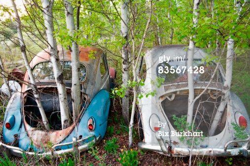 Trees growing thru abandoned cars