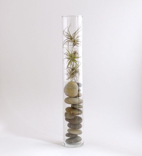 10 Ways to display Air Plants.Love this idea, is always difficult to know how to display these plants !