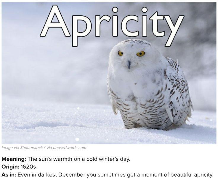 Pin by Samantha Begay on Vocab Rehab   Words, Owl, Snowy owl