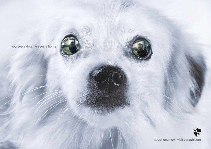 imagen de la cara de un perro mirando a su dueño