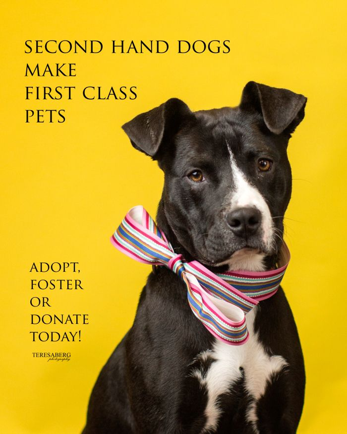 pet adoption campaigns 2nd hand dogs make 1st class pets
