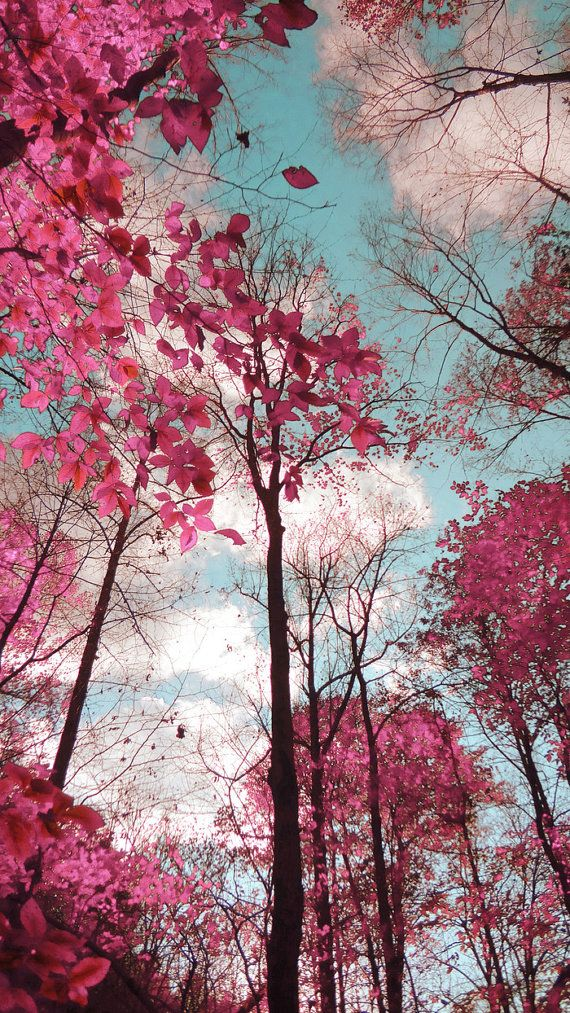 Dreamy Landscape Photograph Pink Blue Trees by TiffanyDawnSmith