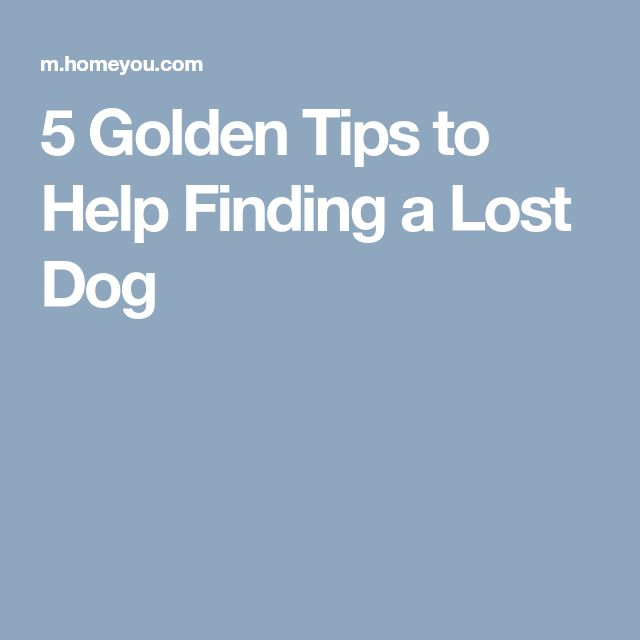 32 best me images on Pinterest Cool things, Funny stuff and Artworks - lost dog poster template