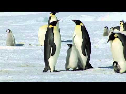 Fabulous footage of penguins in their habitat!!!! Heartwarming and very beautiful, like a dance    LISTEN TO YOUR HEART ~ Mike Rowland, Film by Ruedi & Priska Abbühl