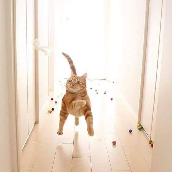 """Must run! Marbles are chasing me!"""