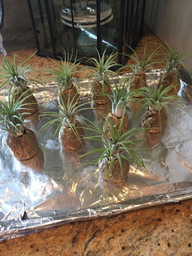 A woman plants pineapples on a baking sheet - no, REALLY!