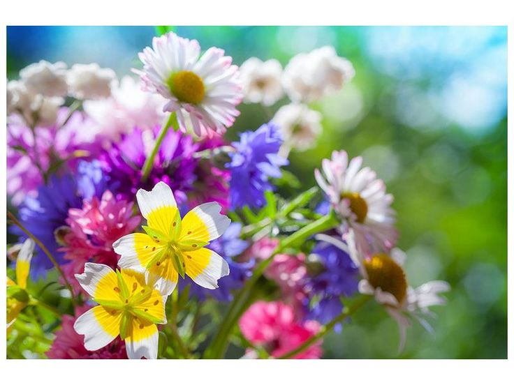 Leinwandbild XXL Gartenblumen