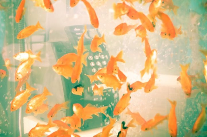 Five Kyoto University of Art and Design students that have taken the initiative to install goldfish tanks across several phone booths in Osaka.
