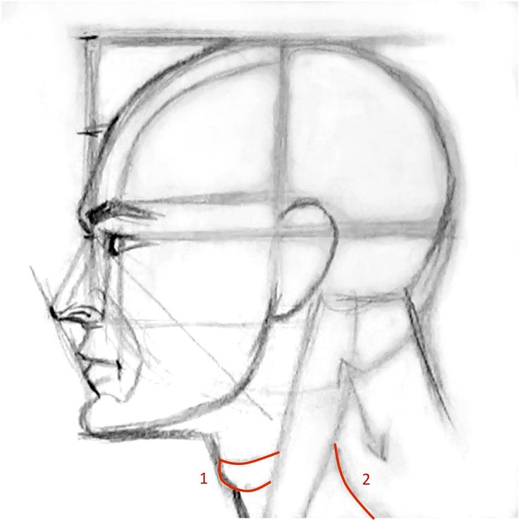 How to draw a face sideview
