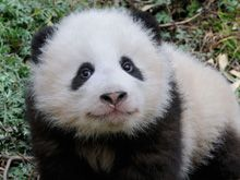 WWF Donate http://wwf.panda.org/how_you_can_help/support_wwf/donate