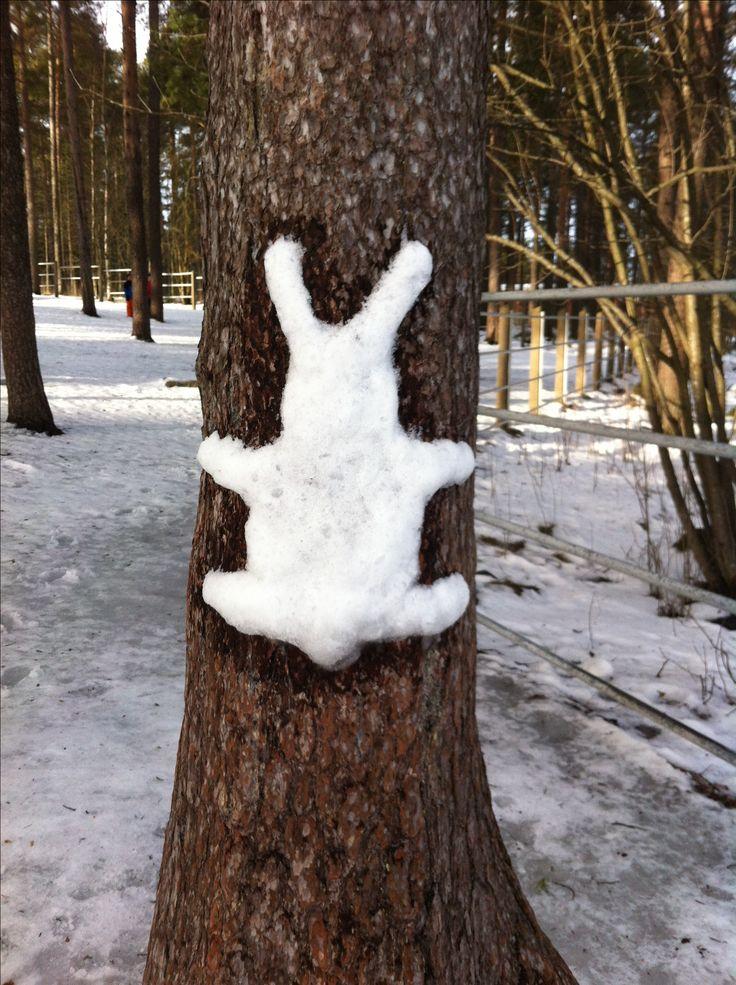 Lumipuput koulun pihapuissa.