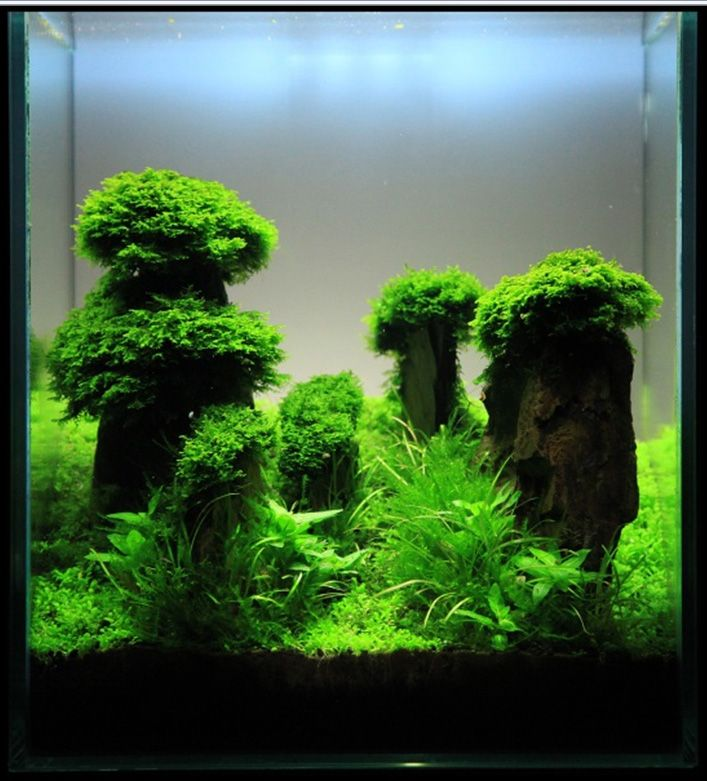 Aquascaping, Inspiration and Tanks on Pinterest