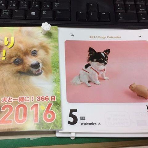 #犬 #いぬ #longcoatchihuahua #チワワ #chihuahua #親バカ #dog #ワンコ #わんこ #日めくり #カレンダー #愛犬 #いろは #ペット 去年の日めくりワンコ。いろはのデビュー作です🍀来年あたりまた挑戦してみようかな^ ^